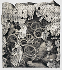 Beatus (Butterflies and Fish),  conté crayon on rag paper, 60.5 x 55 inches