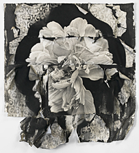 Fragmented Peony and Bees, conte crayon on layered rag paper, 40x38