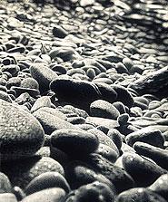 Pebbles #3 31x28 2001 conte crayon on paper